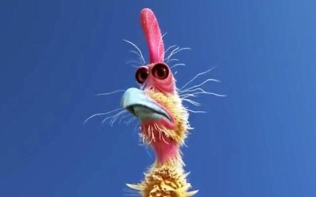 pollo_loco_1